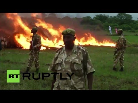 Some 100 tons of ivory set ablaze by authorities in Kenya