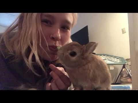 Netherland Dwarf Rabbit - Freddie's Debut