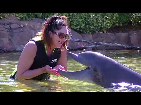 Discovery Cove March 2018