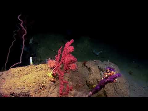Seamounts and Precious Metals 55 HD