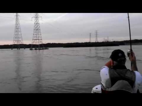 Tennessee river tailrace fishing wheeler dam stripers in for Wheeler lake fishing report