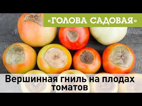 Голова садовая - Вершинная гниль на плодах томатов