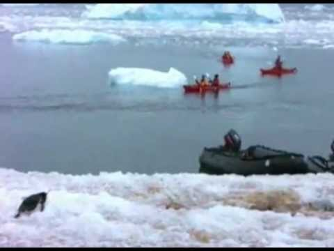 Glacier Collapses Into Ocean.