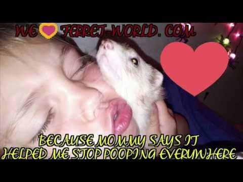 WE LOVE FERRET_WORLD.COM