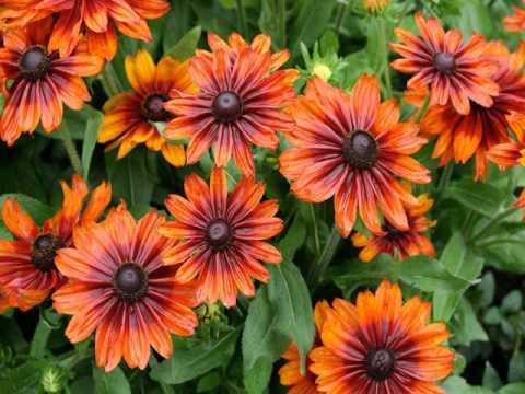 garden flowers gardening & landscaping
