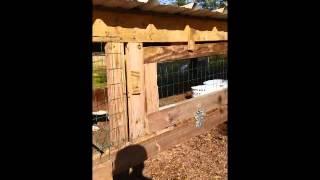 Above Ground Beagle Kennel