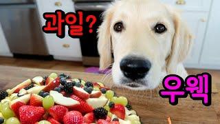 ENG)과일을 처음 먹어본 강아지의 반응 Puppy t…