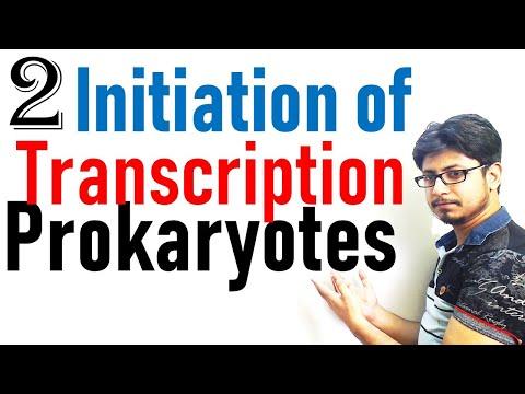 Transcription initiation in prokaryotes | prokaryotic transcription lecture 2