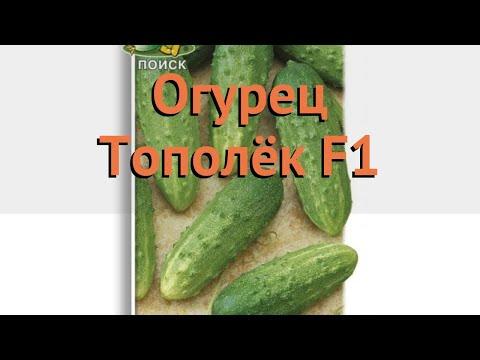 Огурец обыкновенный Тополёк F1 (topolyek f1) 🌿 обзор: как сажать, семена огурца Тополёк F1   обыкновенный   тополёк   огурец   обзор   topolyek   об   f1