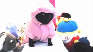 """Pug Fashion Show - """"the Pug Collection"""""""