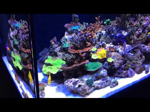 Red Sea Reefer XL 425. 99% SPS dominated REEF tank