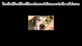 Dogs 101 - Great Dane + Exclusive  Windows 7 Theme Link