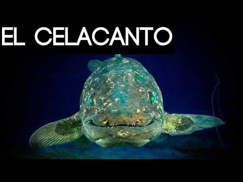 Este pez monstruo antiguo puede vivir 100 años