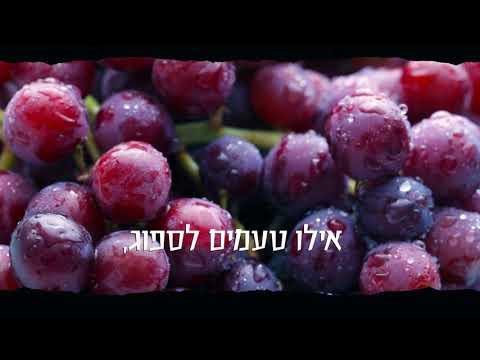 יינות סגל