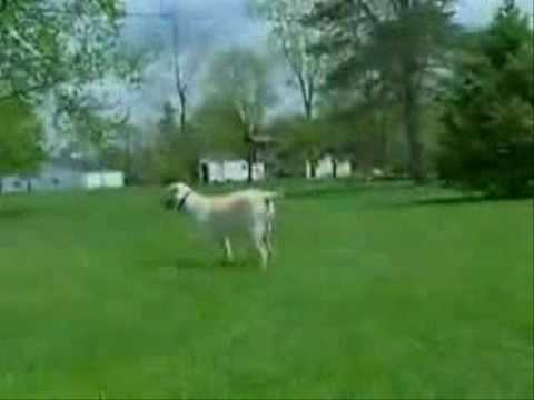 Part 2 Training Your Dog Innotek In Ground Radio Fence Net