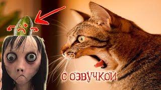 Приколы с котами с ОЗВУЧКОЙ – ТРОЛЛИМ МОМО - СМЕШНЫЕ коты и кошки 2018 – Domi Show