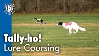 Tally-ho! Lure Coursing