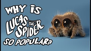 """Why Is """"Lucas the Spider"""" So Popular?"""