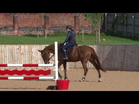 Young Horse Showjumping Training Part 6