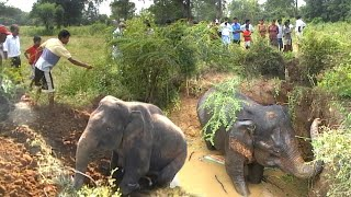 Villagers rescues drowning elephant from deep well