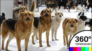 Следователи допросят девушку, пострадавшую от нападения собак в поселке Курсаково thumbnail