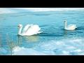 Классная песня Песни под гитару Лебединая верность Рок острова mp3