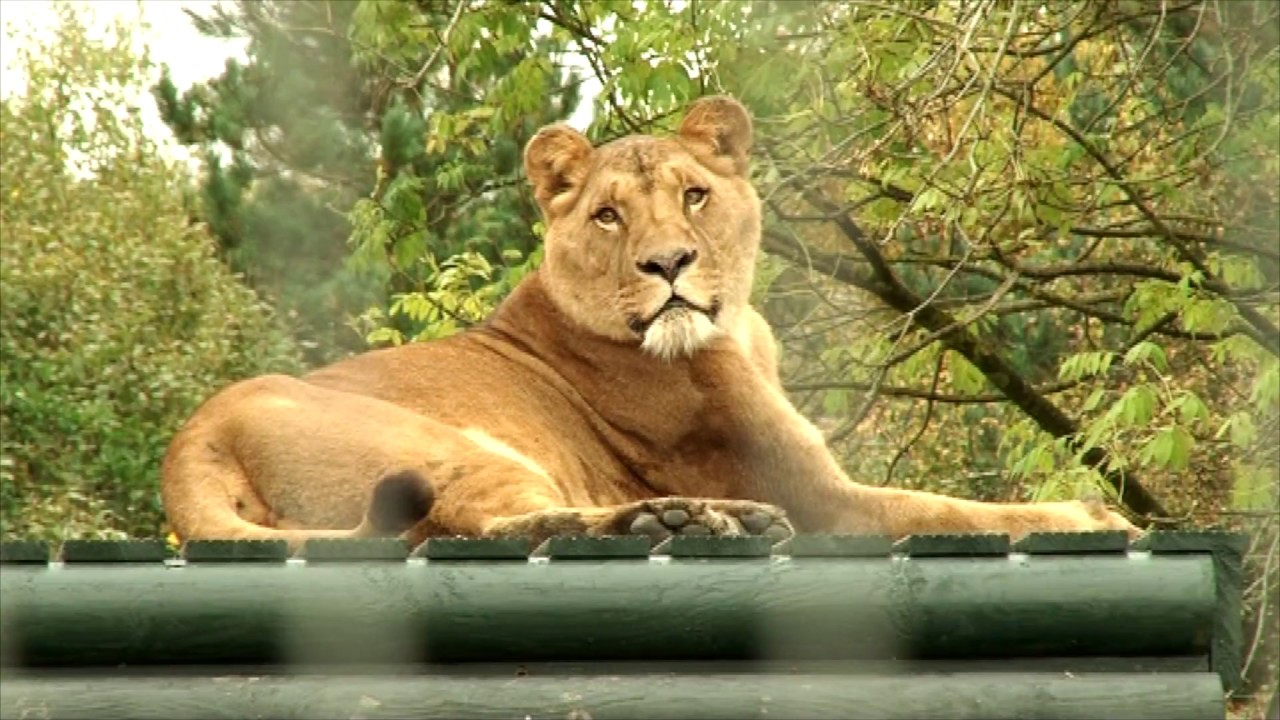 Five Sisters sanctuary and Four Brother Lions
