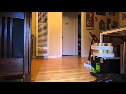 Cute Boston Terrier puppy going crazy (with a surprise for me at the ...