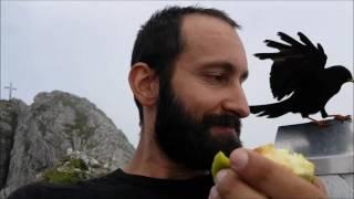 Die Dohlen und der Willi auf dem Aggenstein