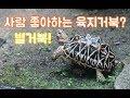 ** 육갑 Youtube Channel in 사람 쫓아오는 별거북? 개북이!? /별거북의 간단한 사육정보(육지거북, 육갑 유튜브) Video on realtimesubscriber.com