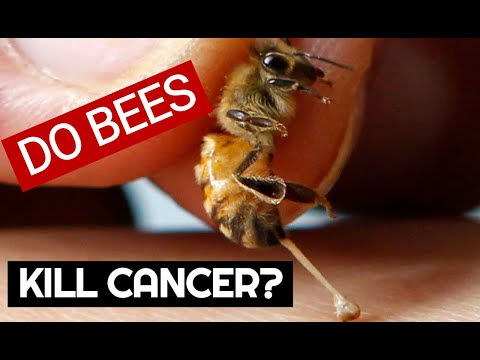 Does bee venom kill skin and breast cancer cells? exciting new research.