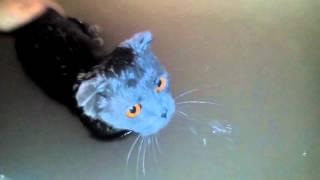 Прикол, кошку купают в ванной