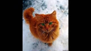 Коты Воители в реальной жизни! 1 часть!