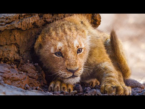 THE LION KING All Movie Clips (2019)