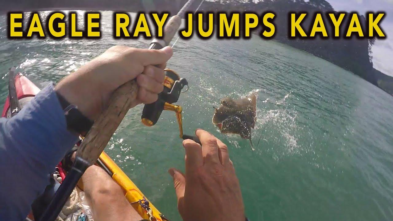 Download Eagle Ray charges my fishing kayak - Orewa, NZ