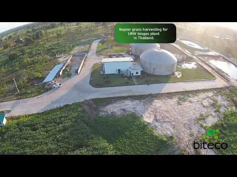 Napier grass harvesting for 1MW biogas plant in Thailand. Part 2