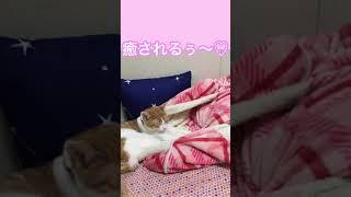 [猫動画]ベビーフェイスな米ちゃんの癒し動画♡2019 06 20 thumbnail