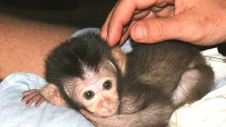 Baby Monkey - A Funny And Cute Baby Monkey Videos Compilation || NEW HD