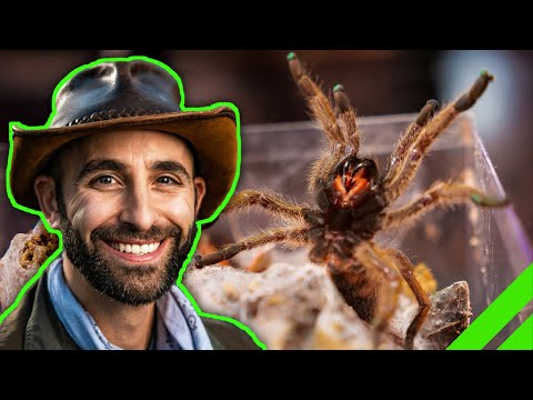 Why Coyote Peterson HASN'T BEEN BIT By A TARANTULA!