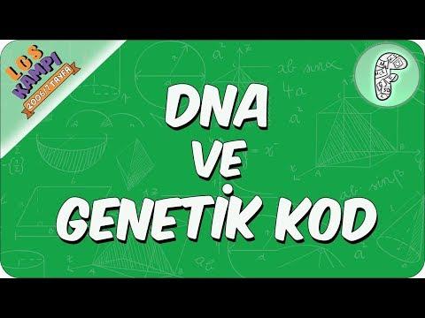 DNA ve Genetik Kod   2020 LGS Kampı