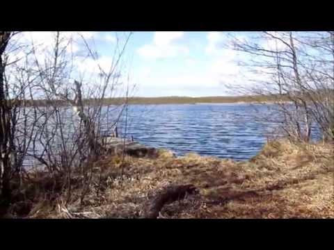 Дачный вояж. Гулянка. Лесное озеро Холсково. Назия.