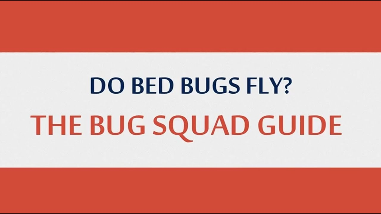 Do Bed Bugs Fly The Bug Squad Guide Youtube