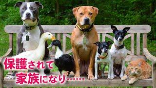 犬、猫、アヒル……? 保護された彼らは、ある夫婦と出会い、ひとつの家族になりました♡