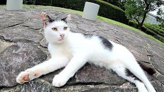 【おかっぱ猫】前髪パッツンのハチワレ猫、臆病だけど愛くるしい