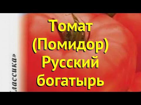 Томат обыкновенный. Краткий обзор, описание характеристик, где купить семена Русский богатырь