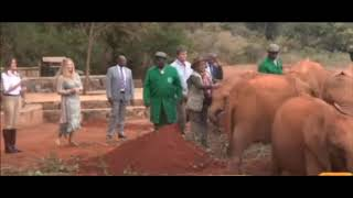 Why Elephant Charged At Melania Trump Ignoring Margaret Kenyatta