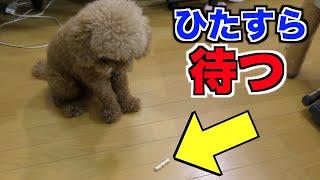 ご視聴あじがどう。 【K-POPチャンネル】➡︎https://www.youtube.com/cha...
