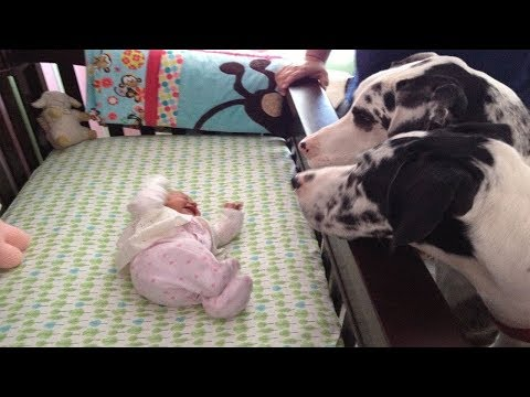 Her Parents Left Her Alone With The Family Dogs. When They're Back They're Completely Stunned