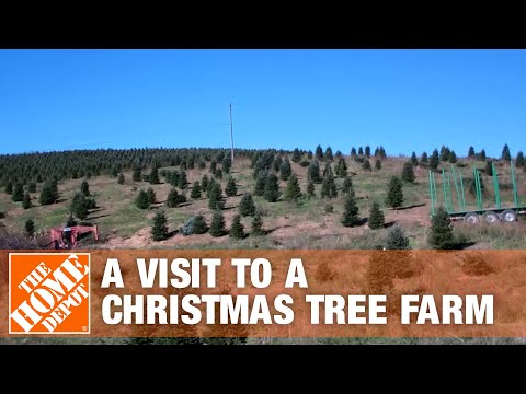 A Visit To A Christmas Tree Farm | The Home Depot