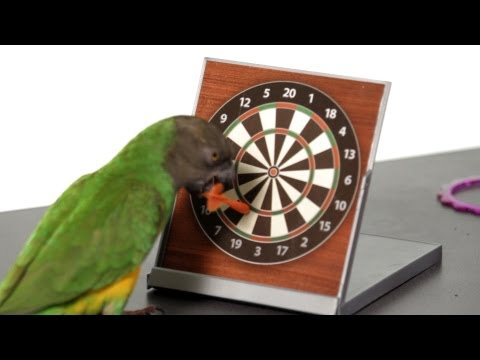 How to Set Up a Training Area | Parrot Training